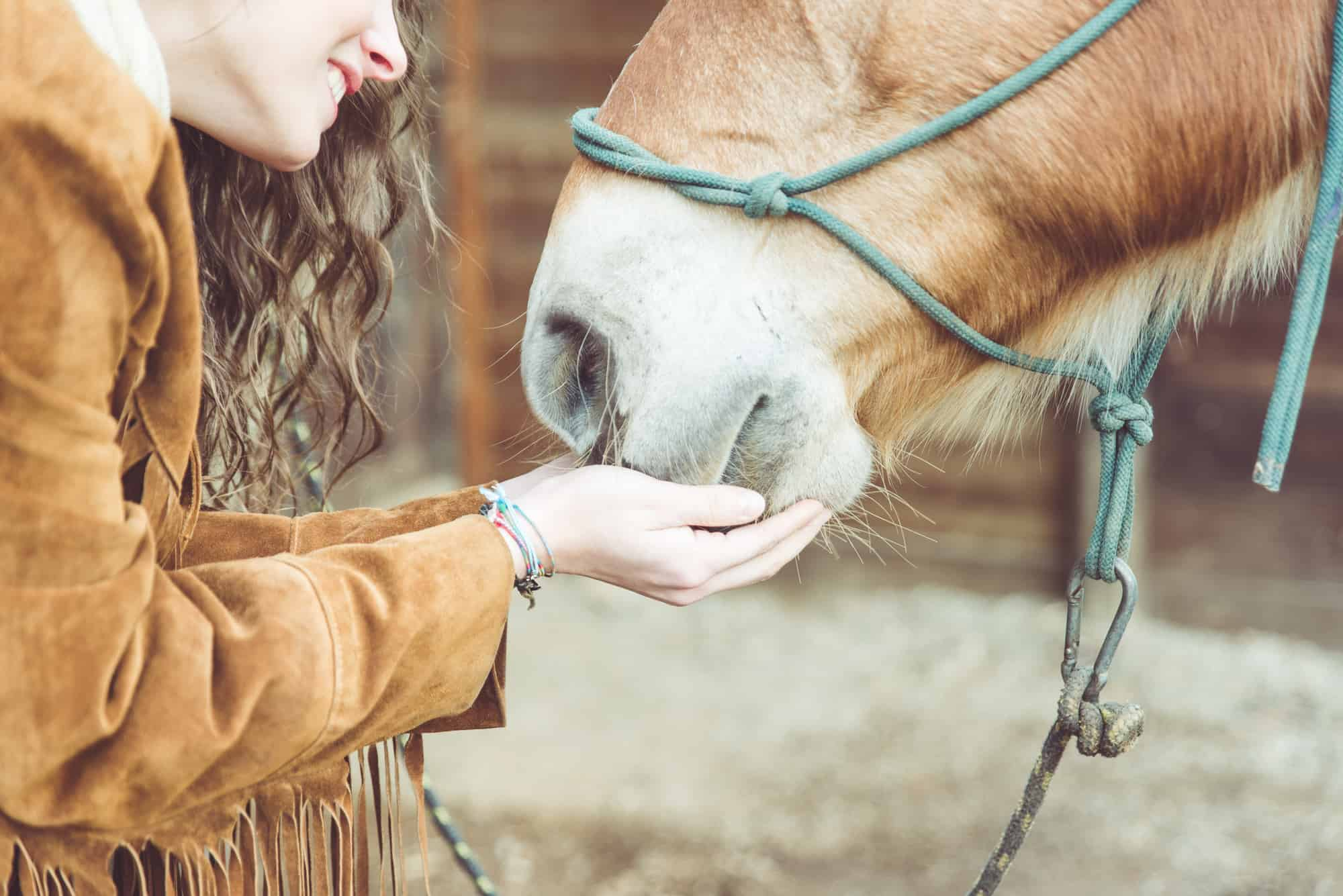 woman petting her horse. close up on hands and horse mouth. concept about animals